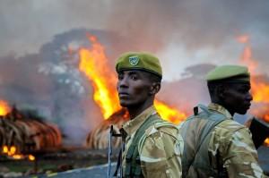 Kenya Burns ivory