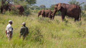 Elewana - TarangireTreetops - Bush Walk